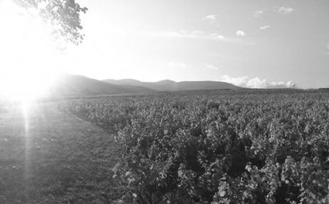 couché soleil sur vignes